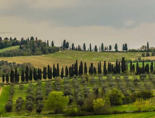 Enoturismo nella terra del Chianti con i vini della cantina Poggio Regini